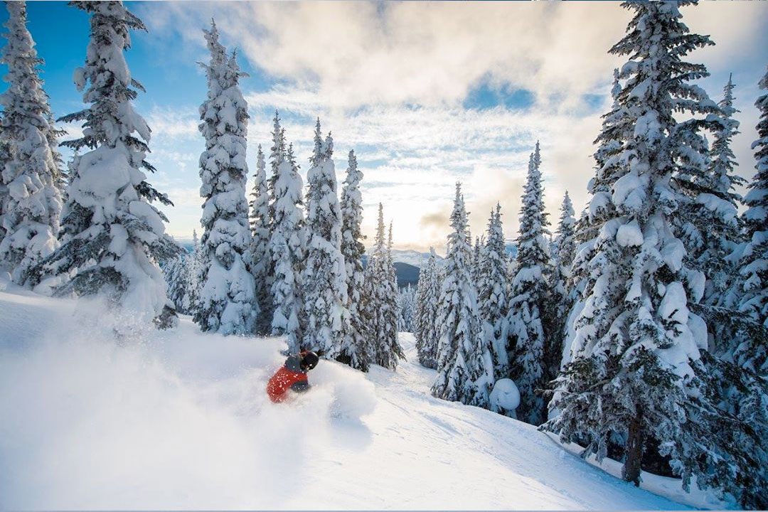 Silver Star Canada Ski Resort skier in powder